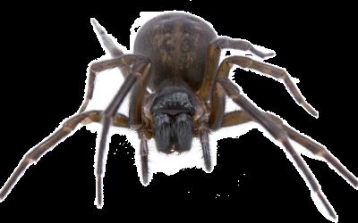 jlpest-control-brighton-spider